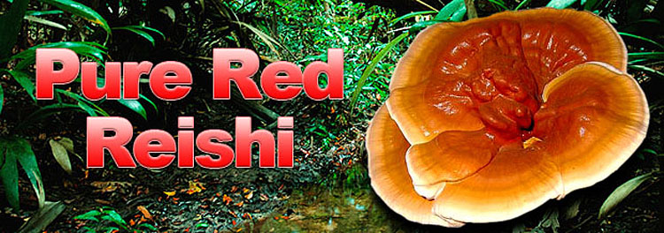 Red_Reishi_header